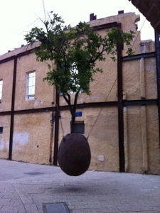 tree in a hanging pot, old jaffa