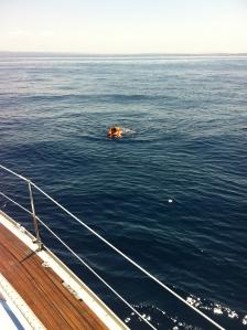A rescued Maya
