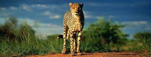 banner-classic-namibia-safari-4