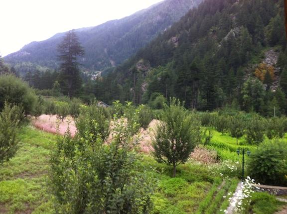 Sangla fields